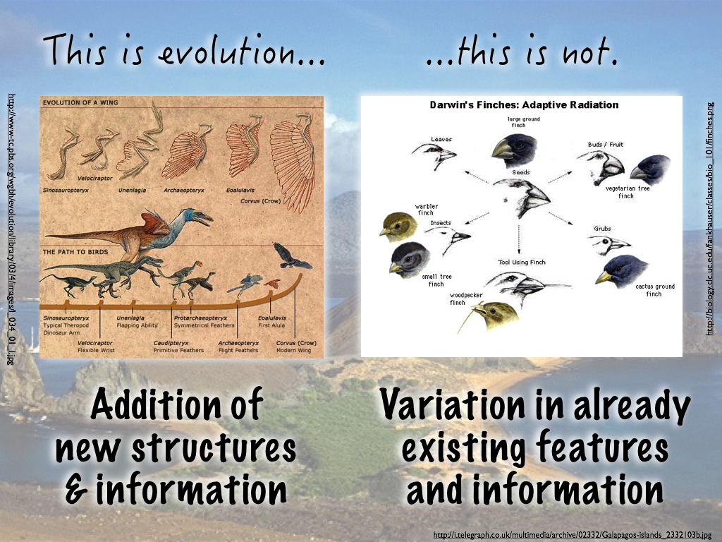 Galapagos Finches Evolution