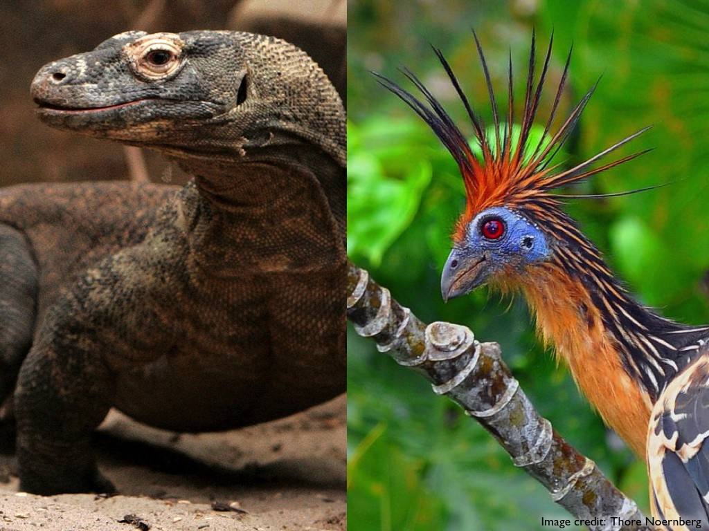 Birds vs. Reptiles.011