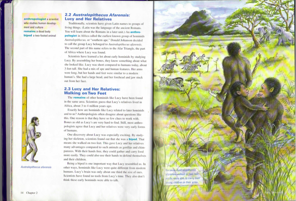 """Lucy"" (Australopithecus afarensis) as she appears on pages 14-15 of 6th grade California textbook History Alive! The Ancient World."