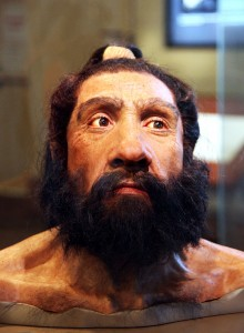 800px-Homo_neanderthalensis_adult_male_-_head_model_-_Smithsonian_Museum_of_Natural_History_-_2012-05-17