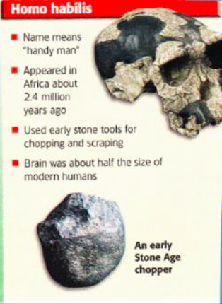 Description of Homo habilis from pg. 30 of the 6th grade Ancient Civilizations textbook by Hold.